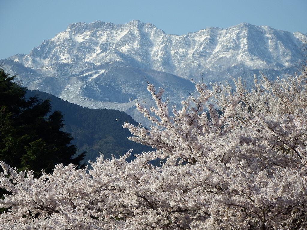 四季の山カレンダー - 春の円山公園と石鎚山