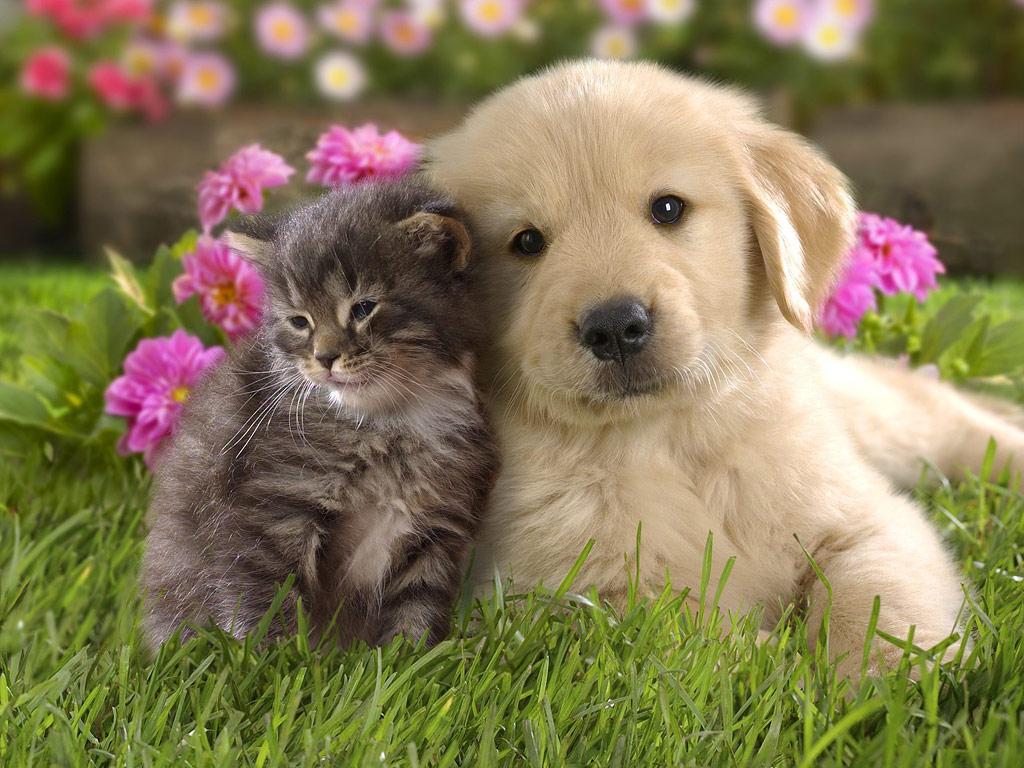 子猫と子犬の仲良しカレンダー