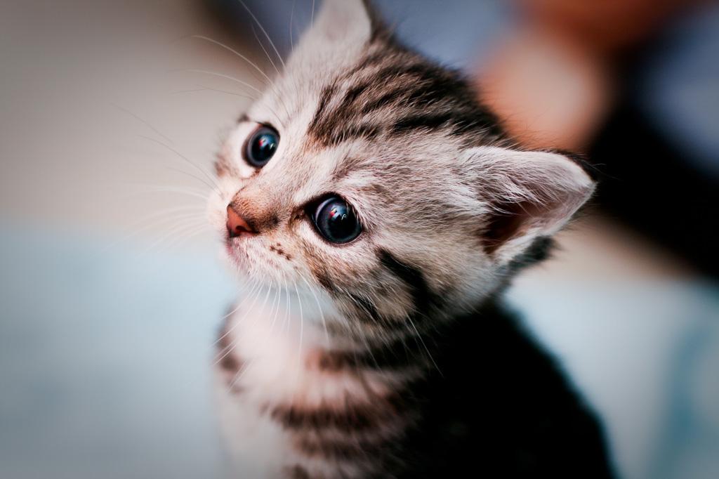 子猫カレンダー  ♡つぶらな瞳で見つめないで♡