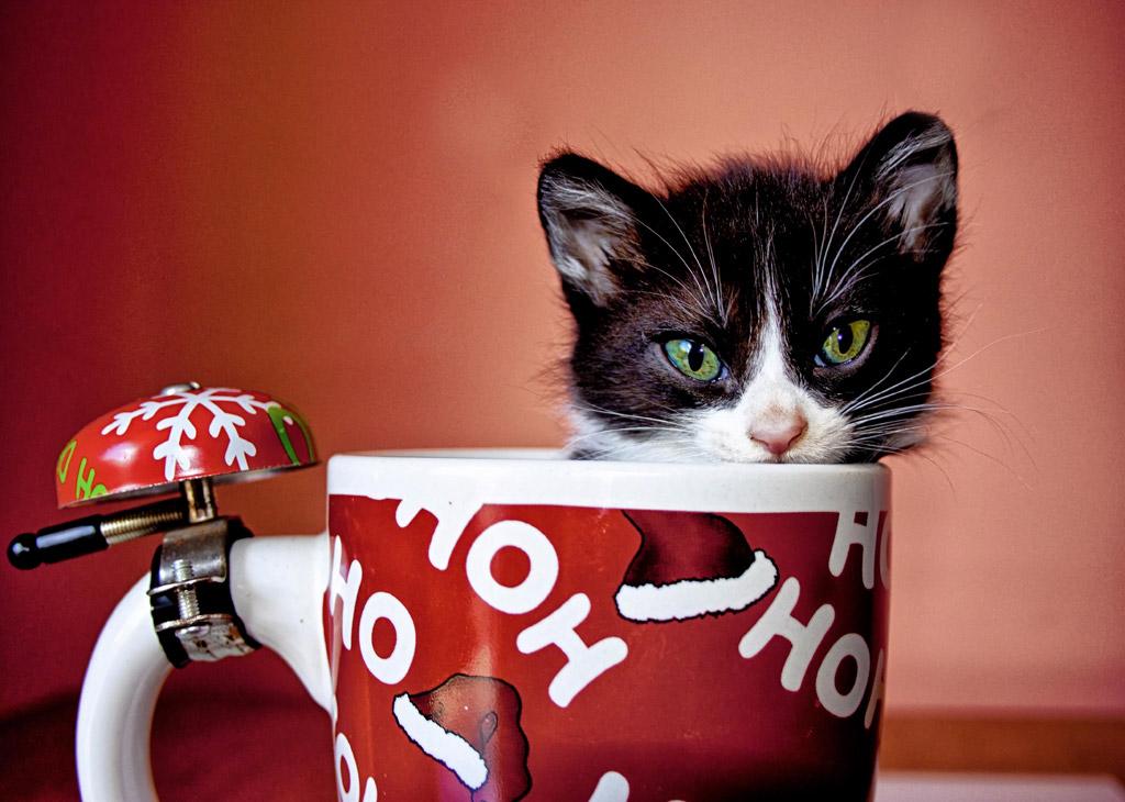 子猫カレンダー  ♡カップは僕のお気に入り♡