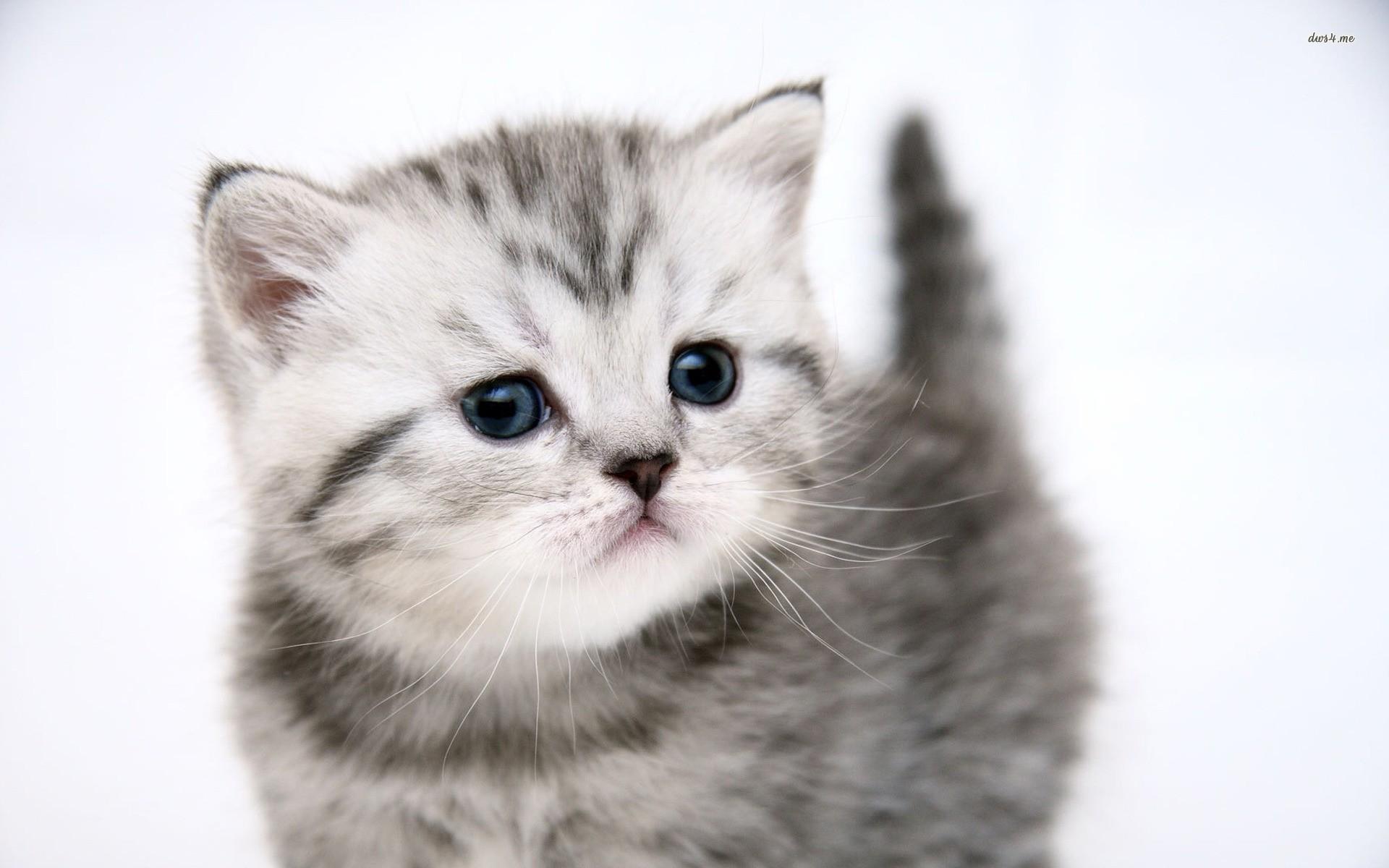 子猫カレンダー  ♡しっぽが僕のお気に入り♡