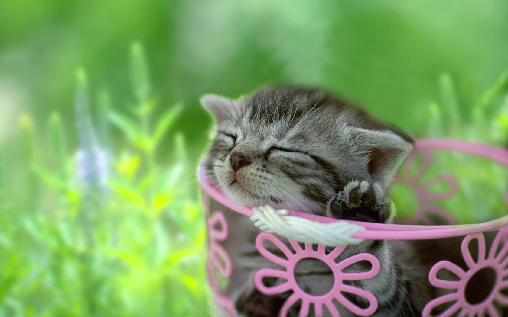 子猫カレンダー  ♡緑の中でまどろむ子猫♡