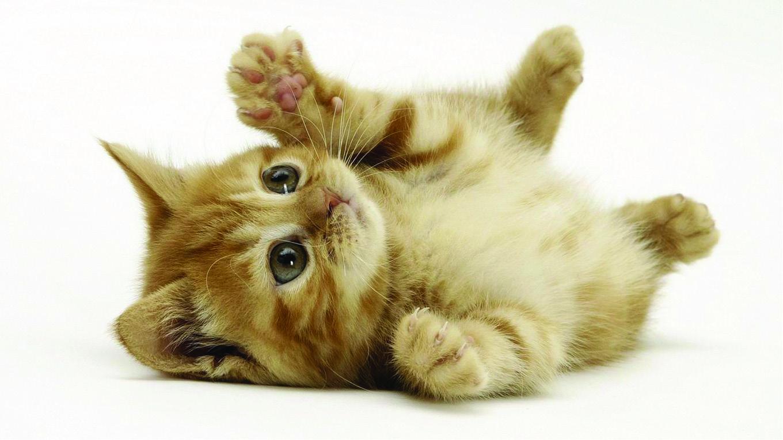 子猫カレンダー