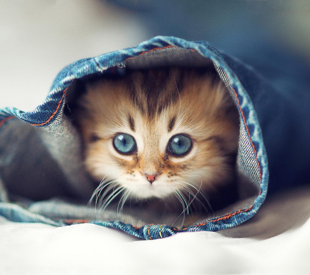 子猫カレンダー  ♡ねぇねぇ一緒に遊ぼうよ♡