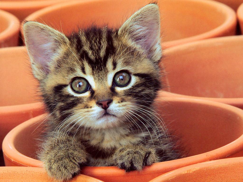 子猫カレンダー  ♡みつかっちゃった?♡