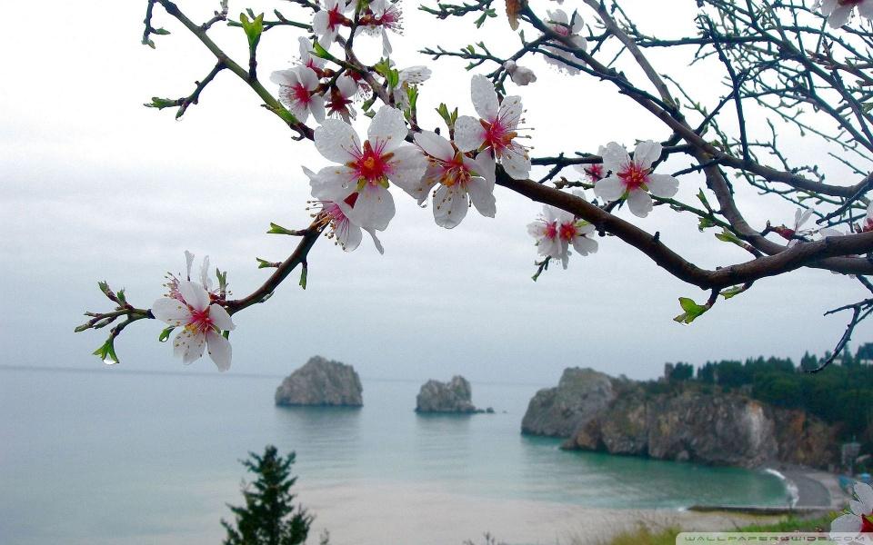 美しい海カレンダー - 春の海