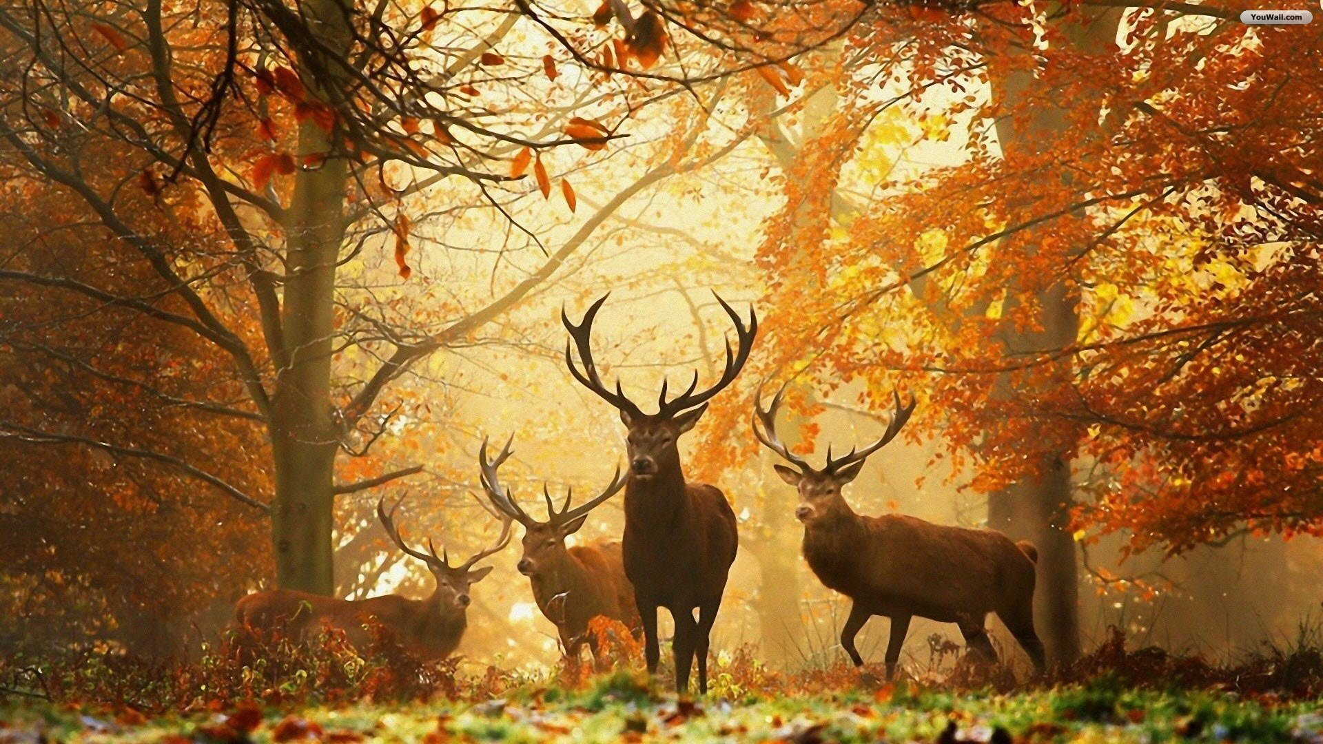 秋の森と鹿